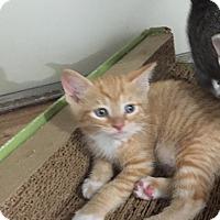 Adopt A Pet :: Ralph - Speonk, NY