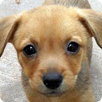 Adopt A Pet :: Skipton - Adoption Pending - Oakley, CA