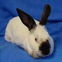 Adopt A Pet :: Sheila - Woburn, MA