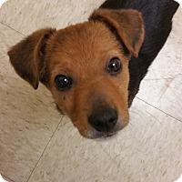 Adopt A Pet :: Dublin - Schaumburg, IL