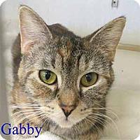 Adopt A Pet :: Gabby - Warren, PA