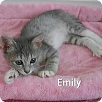 Adopt A Pet :: Emily - Fort Pierce, FL