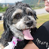Adopt A Pet :: Mary Moon - Newport, KY