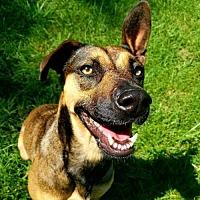 Adopt A Pet :: Niobe - Thomasville, NC