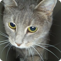Adopt A Pet :: Clairol - Hamburg, NY
