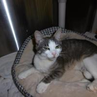 Adopt A Pet :: Lucy - Barco, NC