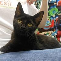Adopt A Pet :: Onyx - Reston, VA