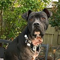 Adopt A Pet :: Africa - Potomac, MD
