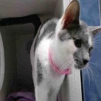 Adopt A Pet :: CALLIE - Canfield, OH