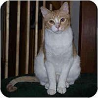 Adopt A Pet :: Gulliver - Redlands, CA