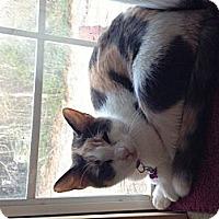 Adopt A Pet :: Snickers - Aiken, SC