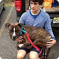 Adopt A Pet :: logan - Wanaque, NJ
