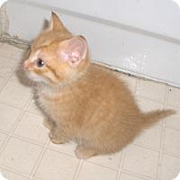 Adopt A Pet :: Nemo - Richmond, VA