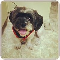 Adopt A Pet :: Theo - Canoga Park, CA