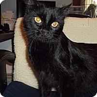 Adopt A Pet :: Silky - Acme, PA