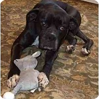 Adopt A Pet :: Mara - Thomasville, GA
