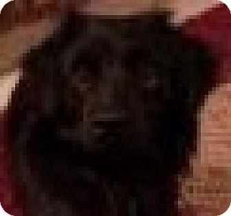 Spaniel (Unknown Type) Mix Dog for adoption in Minneapolis, Minnesota - Dawson