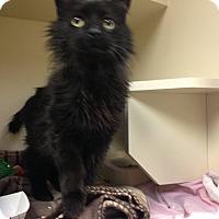 Adopt A Pet :: Lamont - Pittstown, NJ