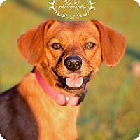 Adopt A Pet :: Frodo - Fort Valley, GA