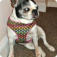 Adopt A Pet :: Hannah - Greensboro, NC