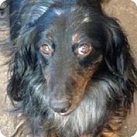 Adopt A Pet :: Buddy Bustle - Houston, TX