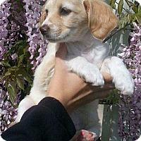 Adopt A Pet :: Minnie Mia - Santa Barbara, CA