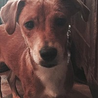 Adopt A Pet :: PALMER BARKLEY - Waldron, AR
