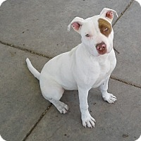 Adopt A Pet :: Beluga - Chula Vista, CA
