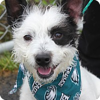 Adopt A Pet :: JACK - Clayton, NJ