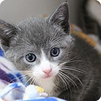 Adopt A Pet :: sage - Muskegon, MI