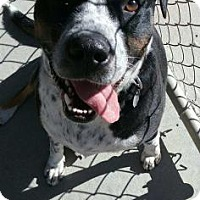 Adopt A Pet :: Solomon - Buffalo, WY