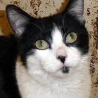 Adopt A Pet :: Cutiebatootie - Westville, IN
