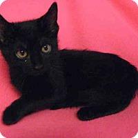 Adopt A Pet :: *STAR - Norco, CA