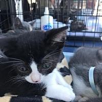 Adopt A Pet :: Heart - Long Beach, CA