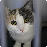 Adopt A Pet :: Marlene - Cape Girardeau, MO