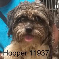 Adopt A Pet :: Hooper - Manassas, VA