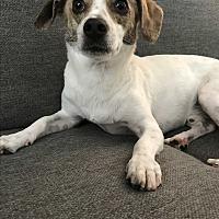 Adopt A Pet :: Yogi - Orange, CA