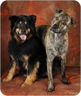 Retriever (Unknown Type) Mix Dog for adoption in Las Vegas, Nevada - Sophie