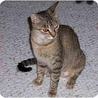 Adopt A Pet :: Dana - Simms, TX