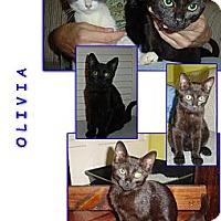 Adopt A Pet :: Olivia - Bunnell, FL
