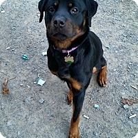 Adopt A Pet :: Diamond - Cuddebackville, NY