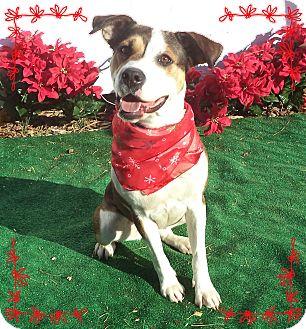 Hound (Unknown Type) Mix Dog for adoption in Marietta, Georgia - KISSES