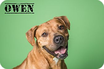 Hound (Unknown Type) Mix Dog for adoption in Grafton, Ohio - OWEN