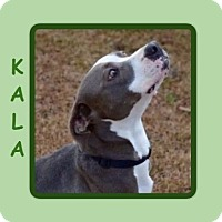 Adopt A Pet :: KALA - Dallas, NC
