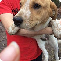 Adopt A Pet :: Jake in Ct - Manchester, CT