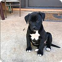Adopt A Pet :: BB $250 - Seneca, SC