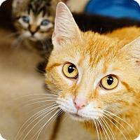 Adopt A Pet :: Sunny - Naperville, IL