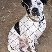 Adopt A Pet :: Jam - Cairo, GA