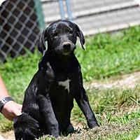 Adopt A Pet :: Basha - South Dennis, MA