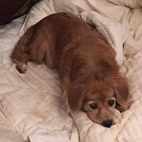 Adopt A Pet :: Appleblossom - Boerne, TX